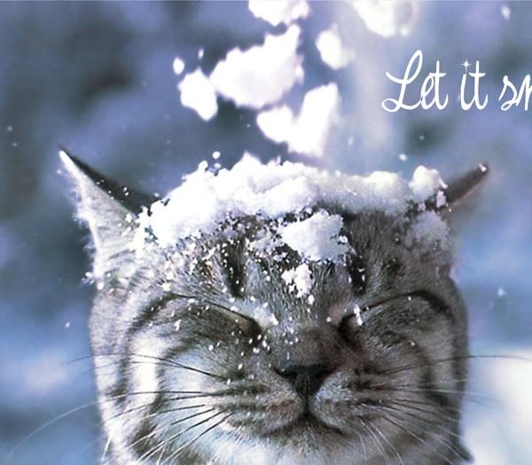 """""""Let It Snow"""" Front"""